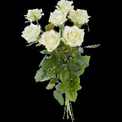 Losse Witte Rozen | Amsterdam Flowers